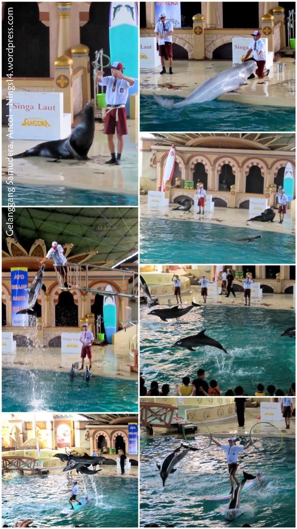 Dolphin Show di Gelanggang Samudera Ancol