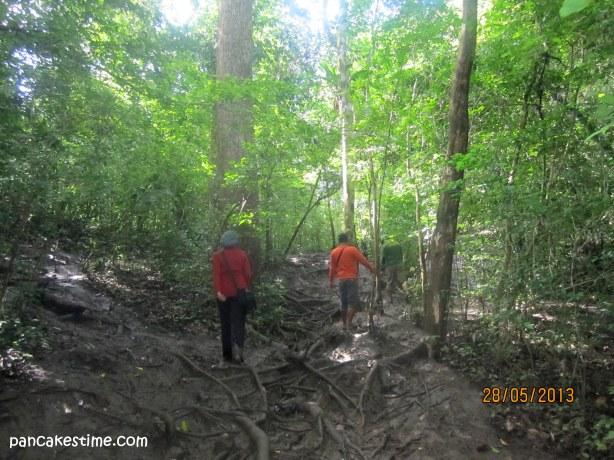 Banyak akar, bikin licin dan terpeleset :p