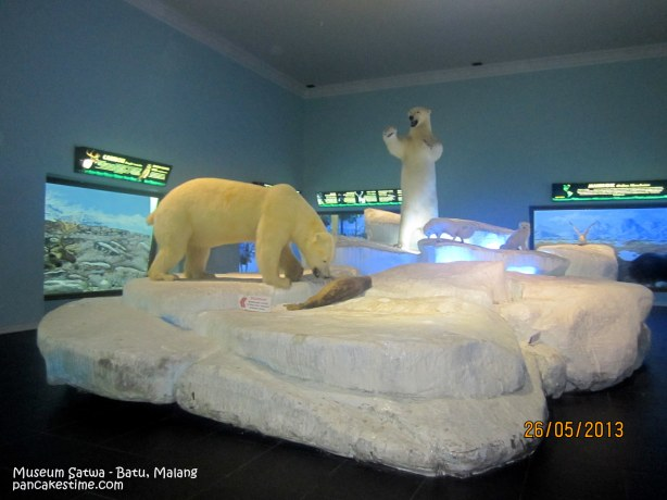 Beruang kutub awetan