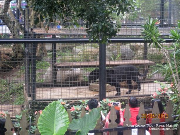 Jaguar yang hampir setinggi pinggang. Ada beberapa jaguar tapi yang ini dipisah mungkin karena lagi BT ya. Abis bolak balik mulu kagak diem2. Di bawah kandangnya adalah kepala orang yang nontonin si jagu